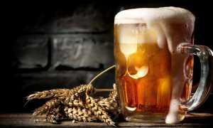 Пиво из концентрата в домашних условиях: как приготовить из концентрата пивного сусла