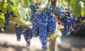 Советы по приготовлению вина в домашних условиях