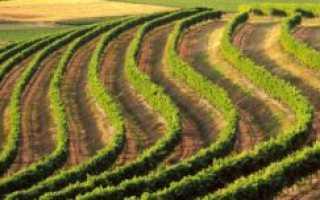 Вино «Пино де Шарант»