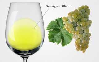 Вино Совиньон Блан (Sauvignon Blanc): особенности и отличия напитков
