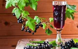 Настойки из черной смородины: на самогоне, водке и спирту в домашних условиях