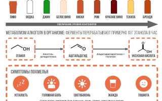 Таблица распада алкоголя в крови человека: сколько времени занимает его выведение из организма женщины