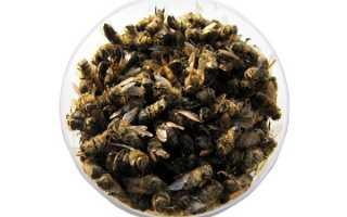 Пчелиный подмор: лечебные свойства, польза и вред для мужчин и женщин