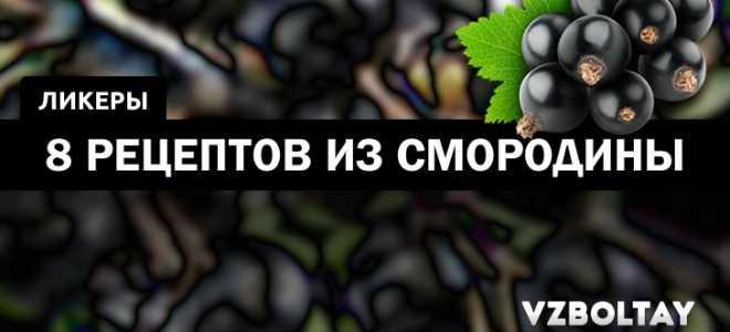 Ликер из черной смородины в домашних условиях: простые рецепты на водке и спирту