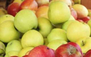 Самогон из яблок в домашних условиях: простой, пошаговый рецепт приготовления без дрожжей и с ними