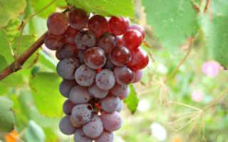 Вино из Лидии: рецепты приготовления алкогольного напитка